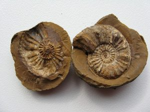 fossil shells - bible facts