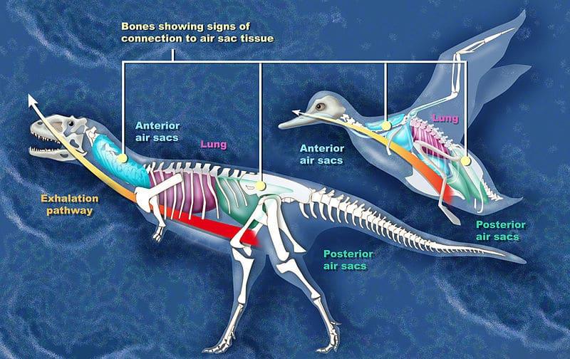 Dinosaurs infographic tissue and bones