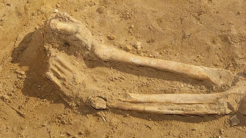 Human bones legs feet excavation