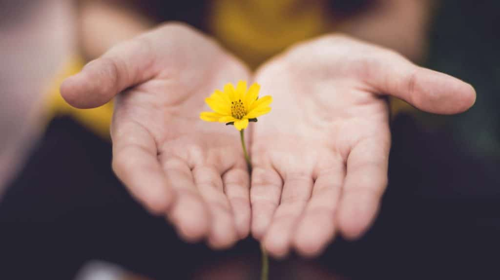 Flower in open hands - What Jesus Says About Forgiveness